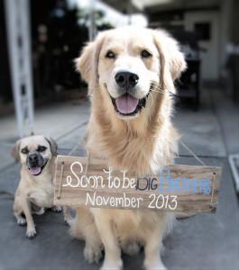 Anunciar un embarazo con perros